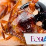Fobia a las Cucarachas o Katsaridafobia
