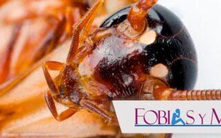 Katsaridafobia: Fobia a las cucarachas
