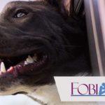 Cinofobia: ¿Tienes miedo a los perros?